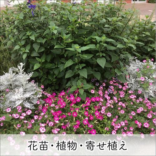 花苗・植物・寄せ植え